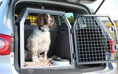 Hvordan har hunden det best i hundeburet på biltur?